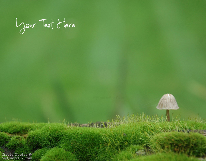 Design your own names of Beautiful Moss Life