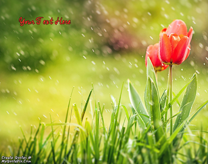 Write quote on spring tulips and rain picture design your own names of spring tulips and rain mightylinksfo