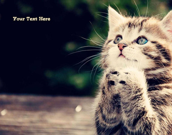Cute Cat quote pictures