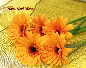 Orange Flower quote pictures