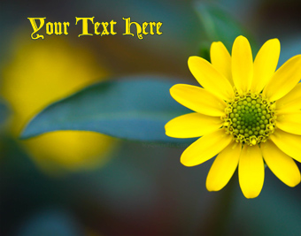 Yellow Macro Flower quote pictures